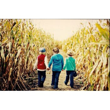 Knollbrook Farm - Corn Maze Family 4-pack