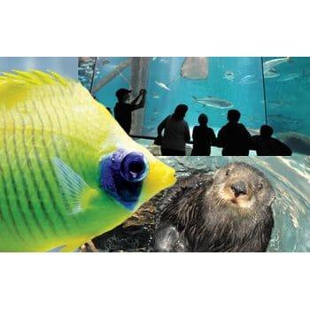 Audubon Aquarium of the Americas Family 4-Pack
