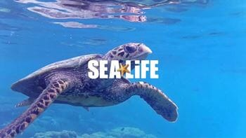 SEA LIFE at Mall of America- Four General Admission Tickets