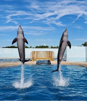 Gulf World Marine Park - Admission For Two