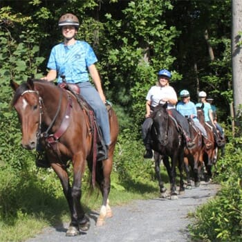 Mountain Laurel Riding Stables