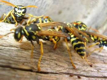 Residential Stinging Insect Removal!