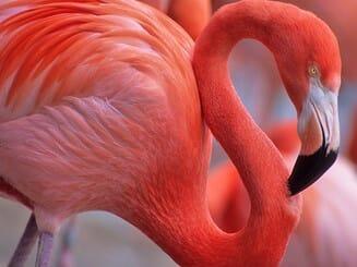 Audubon Zoo Family 4-Pack