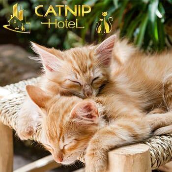 Catnip Hotel - Buy One Get One Day Room