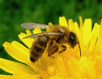 What's the Buzz Event at Pittsburgh Botanic Garden!-3