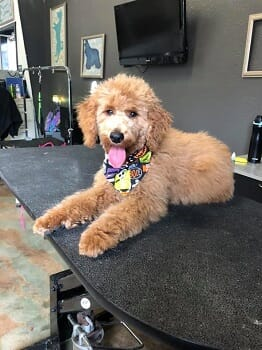 Unleashed: One-Month of Unlimited Doggie Daycare