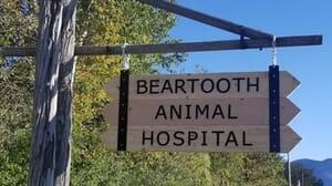 Beartooth Animal Hospital - Female Canine Spay Certificate